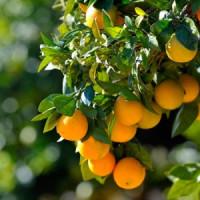 Плодовые растения (0)