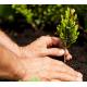 Посадка и приживаемость растений
