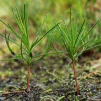 Растения для доращивания (0)