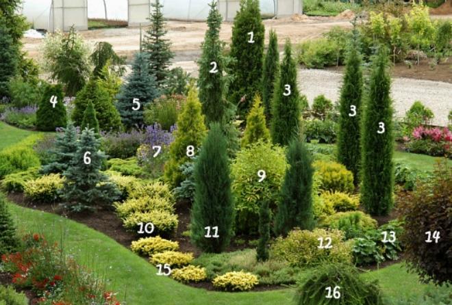 Садовый дизайн хвойные