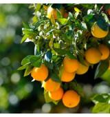 Плодовые растения