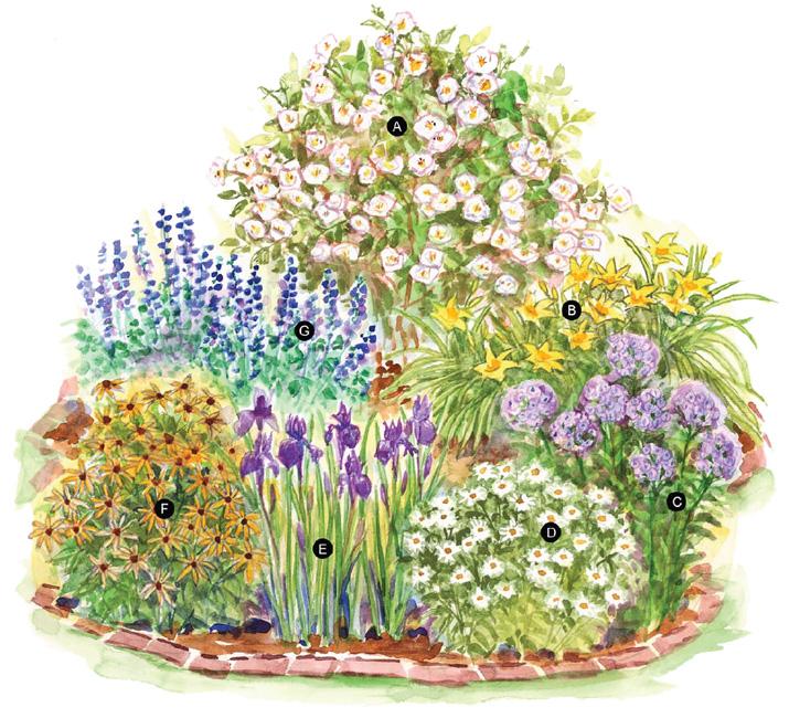 картинки схем цветников этим
