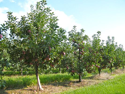 Советы по выращиванию плодовых и декоративных растений
