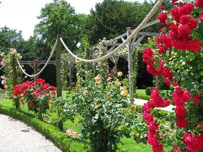 Ландшафтный дизайн розарии